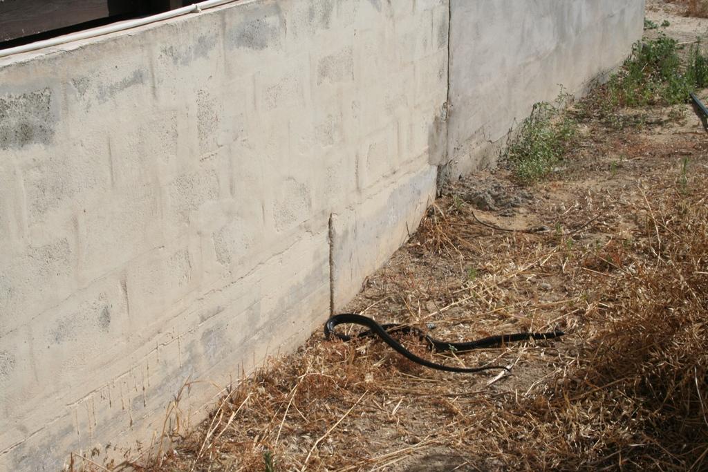 black snake 2.jpg