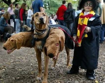 Dog Harry Potter.jpg