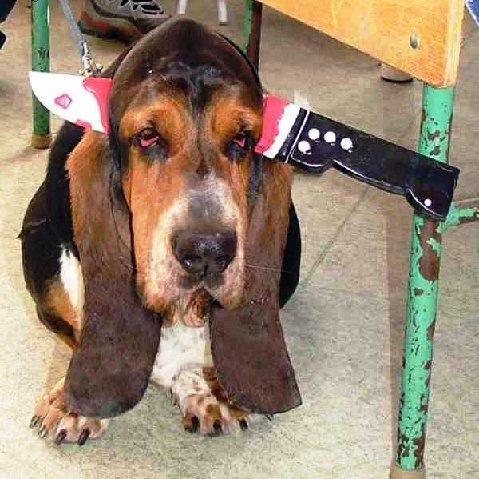 Dog knife.jpg