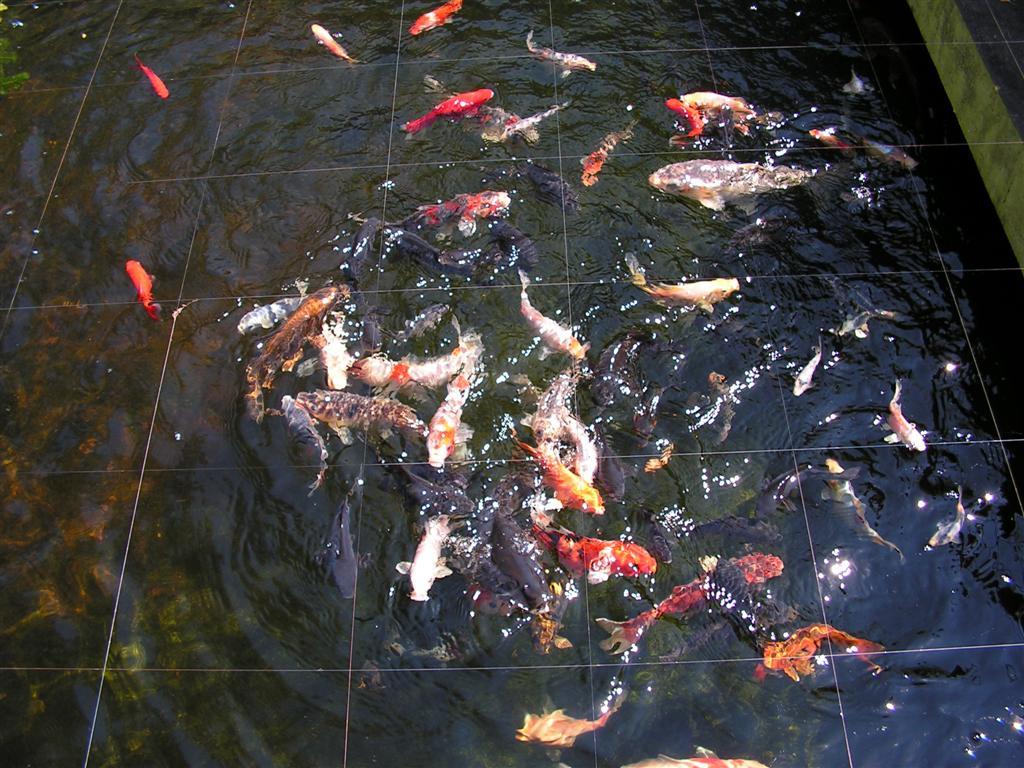 Heron Food 2 (Large).JPG