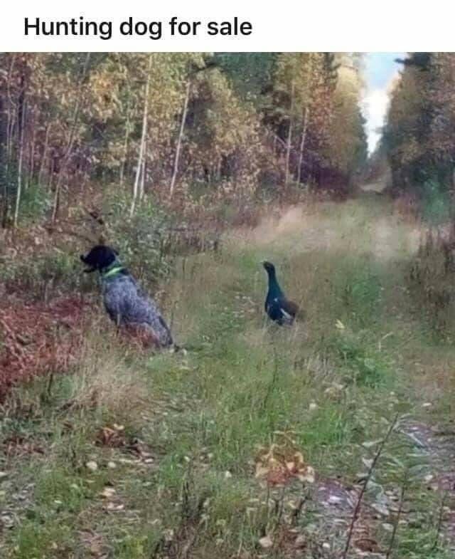 hunting dog.jpg