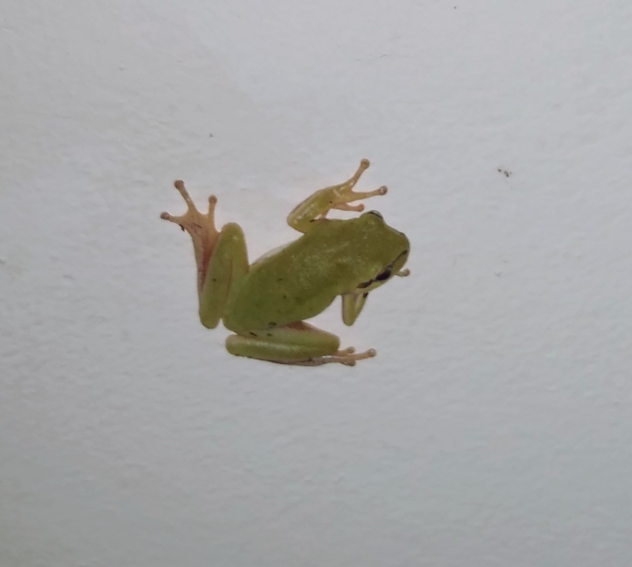 night frog.jpg